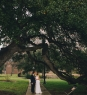 huge oak tree on capitol grounds austin